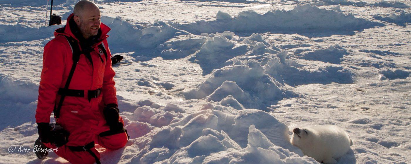 Koen Blanquart - Blanchon, Canda, Harp Seals, Ice, Polar IMG_2289